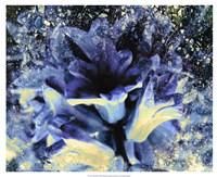 Silverbell I Fine Art Print