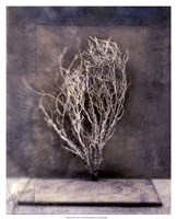 Desert Form III Fine Art Print