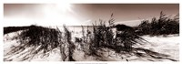 """The Wind in the Dunes I by Noah Bay - 37"""" x 13"""""""