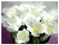 "Sunlit Tulips I by Noah Bay - 25"" x 19"""