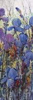 Iris Field III Framed Print
