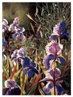 Iris Garden II Fine Art Print