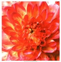 Painterly Flower II Fine Art Print