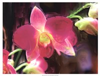 "Painterly Flower V by Lola Henry - 25"" x 19"", FulcrumGallery.com brand"