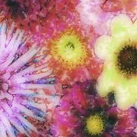 Floral Reef III by James Burghardt - various sizes