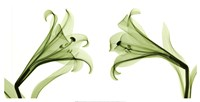 Lilies [Positive] Fine Art Print