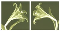 Lilies [Negative] Fine Art Print