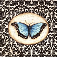 Fanciful Butterfly II Framed Print