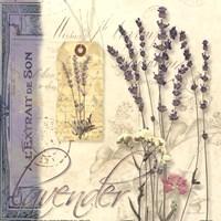 Lavender Fine Art Print