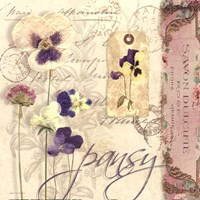 Pansy Fine Art Print