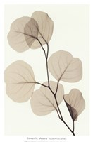 "EUCALYPTUS LEAVES by Steven N. Meyers - 13"" x 20"" - $11.49"