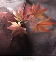 Red Maple Fine Art Print