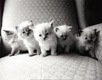 Five Kittens Fine Art Print