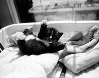 Kitten Laundry Fine Art Print