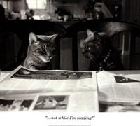 Not While I'm Reading Fine Art Print