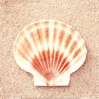 "Scallop Shell by Carolyn Cochrane - 12"" x 12"""