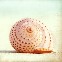 "Seashell Voices by Carolyn Cochrane - 12"" x 12"""