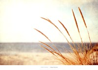 Warm Breeze Fine Art Print