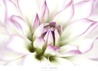 """Dahlia by Dawn Leblanc - 36"""" x 26"""""""