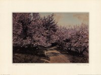 "Disappearing Blossom by Wallace Nutting - 24"" x 18"""