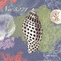 "Shells on Blue by Wendy MacFarlane - 12"" x 12"""