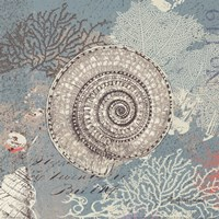 Shells On Aqua Fine Art Print