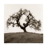 Hillside Oak Tree Fine Art Print