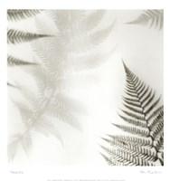 Ferns No. 2 Fine Art Print