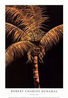 Palm Oro Fine Art Print