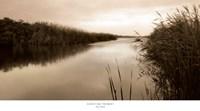 River Reeds Fine Art Print