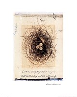 Bird's Nest Fine Art Print