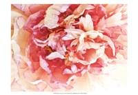 Monet's Peony II Fine Art Print