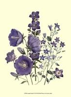 Florals II Fine Art Print