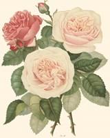 Vintage Roses II Fine Art Print