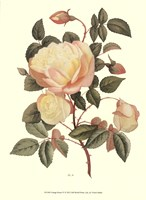 Vintage Roses IV Fine Art Print