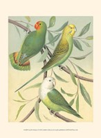 """Parakeets I by Cassell - 10"""" x 13"""""""