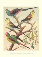 Parakeets IV Fine Art Print