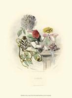 Le Fleur AnimT VII Fine Art Print