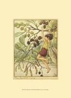 The Alder Fairy Fine Art Print