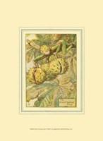The Horse Chestnut Fairy Fine Art Print