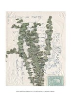 "Small Postcard Wildflowers III by Jennifer Goldberger - 10"" x 13"""