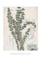 "Small Postcard Wildflowers IV by Jennifer Goldberger - 10"" x 13"""