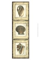 "Small Rustic Shell Panel I by Vision Studio - 10"" x 13"" - $12.99"