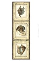 "Small Rustic Shell Panel II by Vision Studio - 10"" x 13"" - $12.99"