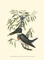 Small Antique Kingfisher II Fine Art Print