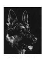 Canine Scratchboard I Fine Art Print