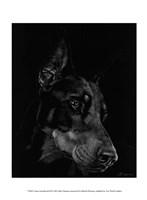 Canine Scratchboard III Fine Art Print
