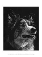 Canine Scratchboard IV Fine Art Print