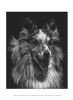 Canine Scratchboard VIII Fine Art Print