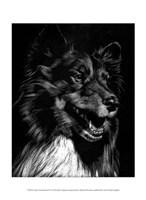 Canine Scratchboard X Fine Art Print